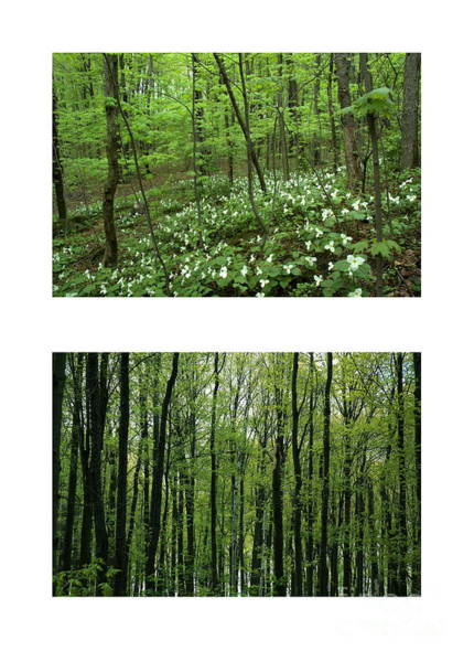 Photograph - Trillium Heaven And Spring Forest by Kathi Shotwell