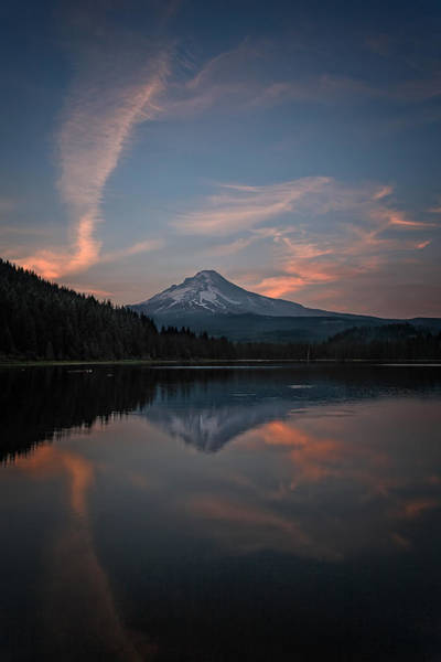 Photograph - Trillium Twilight by Wes and Dotty Weber