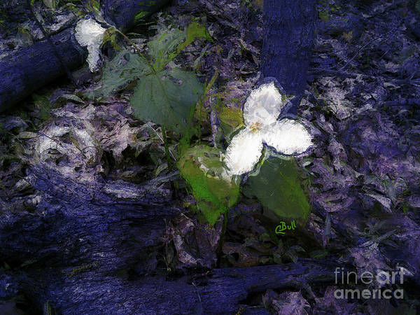 Photograph - Trilliums by Claire Bull