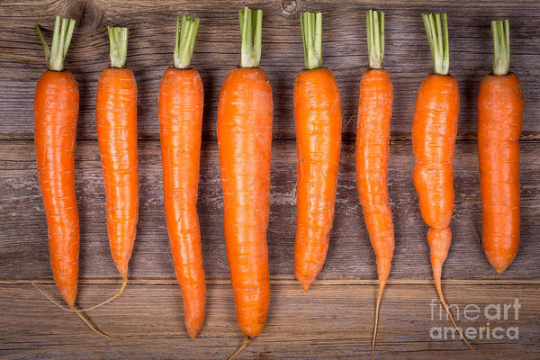 Wall Art - Photograph - Trimmed Carrots In A Row by Jane Rix