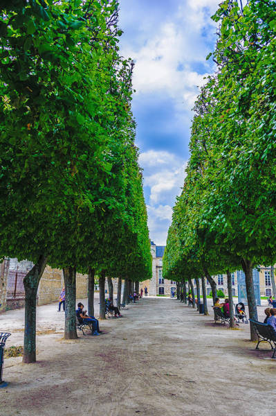 Photograph - Trimmed Trees by Louis Dallara
