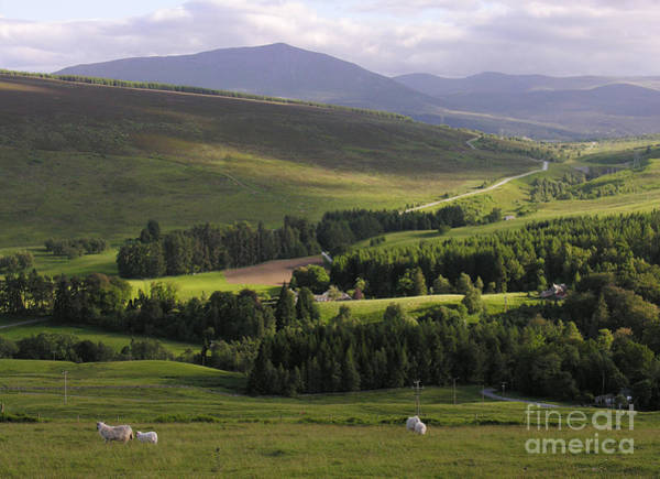 Photograph - Summer In The Hills Of Perthshire  by Phil Banks