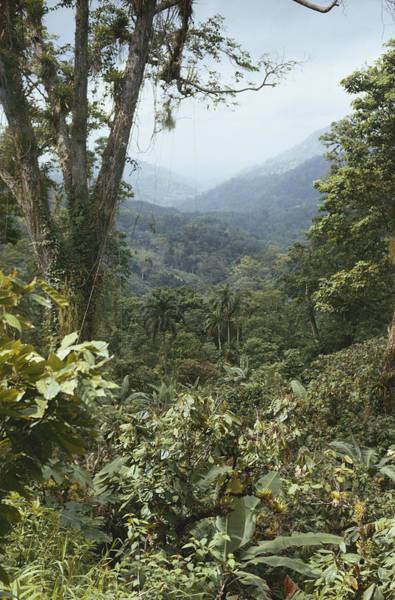 Wall Art - Photograph - Trinidad Rainforest by Robert C. Hermes