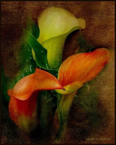 Calla Mixed Media - Trio Of Calla Lilies by Linda Seifried