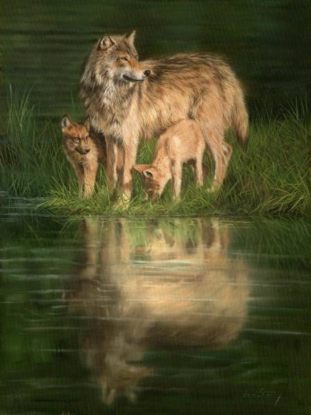 Pup Painting - Trio Of Wolves by David Stribbling