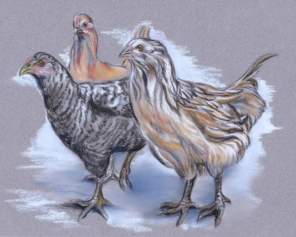 Pastel - Trio Of Young Chickens by MM Anderson