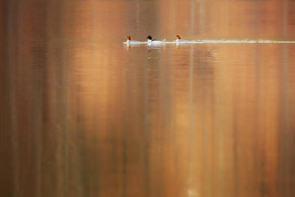 Photograph - Trio Reflections by Bill Wakeley