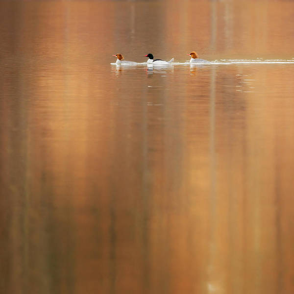 Photograph - Trio Reflections Square by Bill Wakeley
