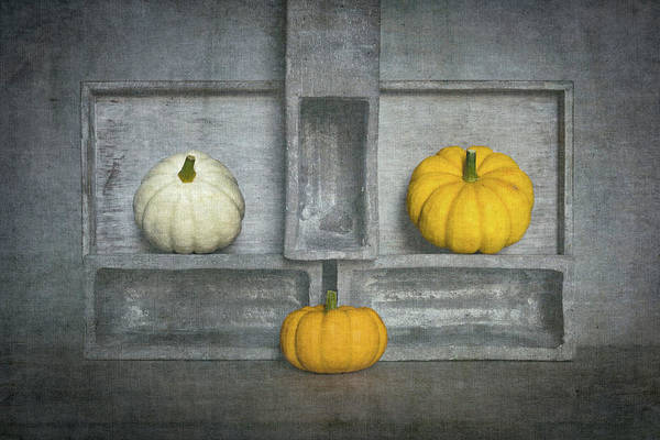 Pumpkins Wall Art - Photograph - Trio's IIi by Luc Stalmans