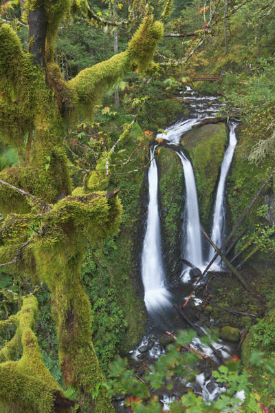 Triple Falls Photograph - Triple Falls On Oneonta Creek, Columbia by William Sutton
