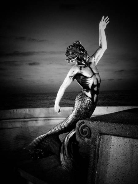 Photograph - Triton Gris by Natasha Marco