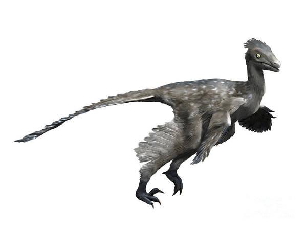 Cutout Digital Art - Troodon Dinosaur by Nobumichi Tamura