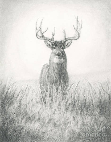 Whitetail Drawing - Trophy Whitetail by Kelsey Adams