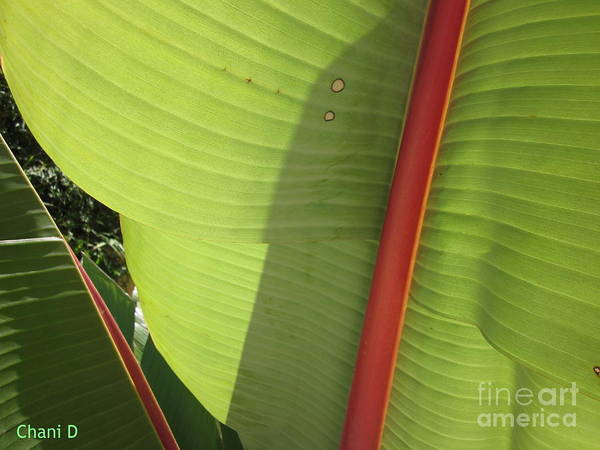 Photograph - Tropical Beauty by Chani Demuijlder
