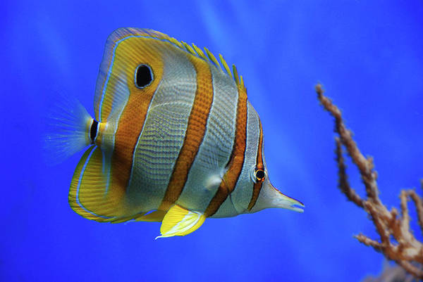 Fish Photograph - Tropical Beauty by Jan Lykke