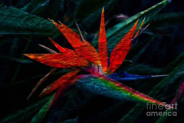 Photograph - Tropical Bird Of Paradise by Susanne Van Hulst