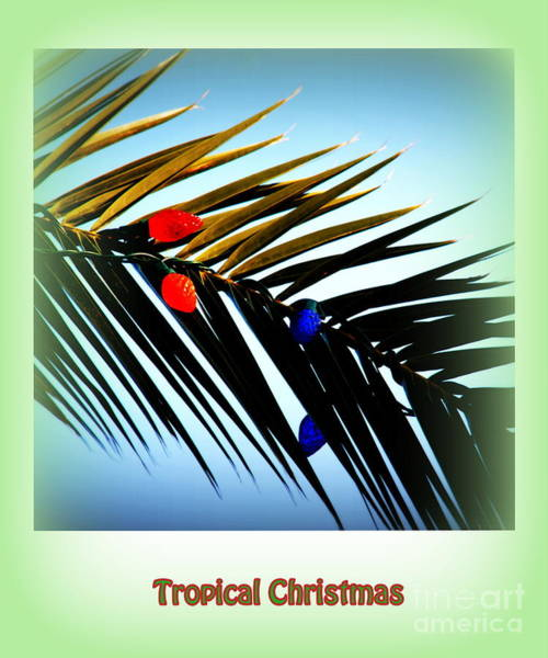 Photograph - Tropical Christmas by Susanne Van Hulst