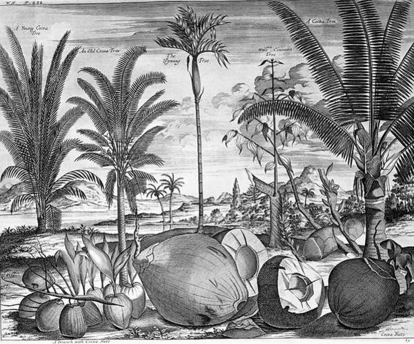 Wall Art - Photograph - Tropical Crops by George Bernard/science Photo Library
