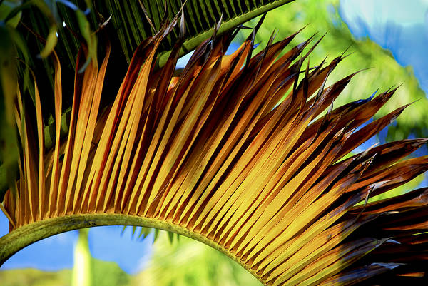 Photograph - Tropical Curves by Christi Kraft