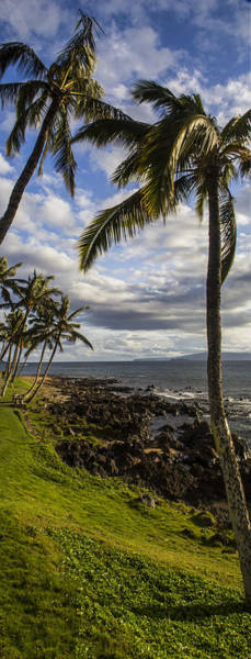 Kihei Photograph - Tropical Days by Brad Scott