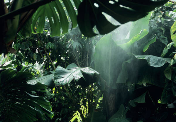 Rain Forest Photograph - Tropical Downpour by Ian Gowland/science Photo Library