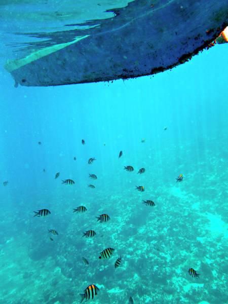 Wall Art - Photograph - Tropical Fish by John Seaton Callahan