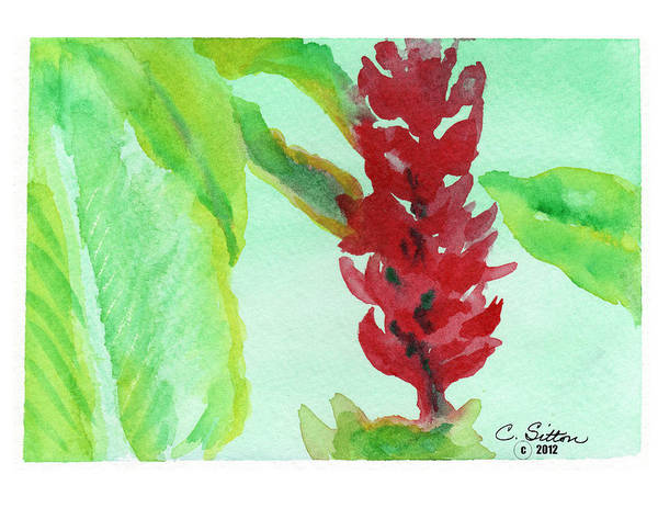 Painting - Tropical Flowers 2 by C Sitton