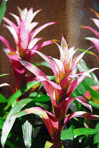 Photograph - Tropical Foliage by Deborah Hughes