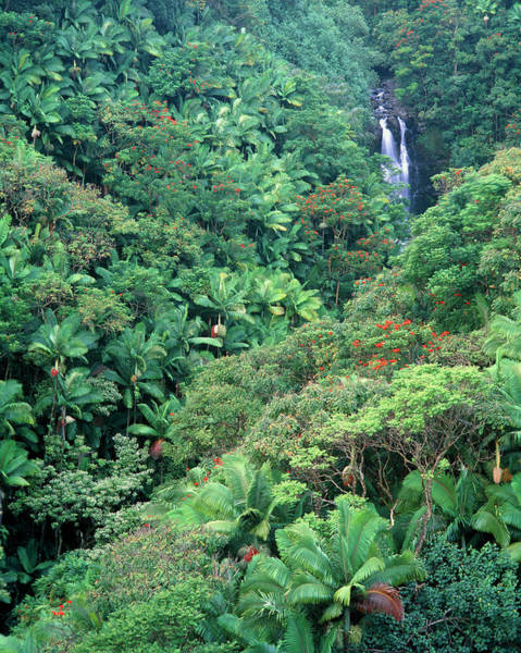 Humid Photograph - Tropical Forest Surrounding Waterfall by Simon Fraser/science Photo Library