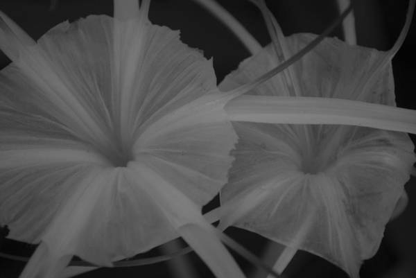 Photograph - Tropical Garden by Miguel Winterpacht