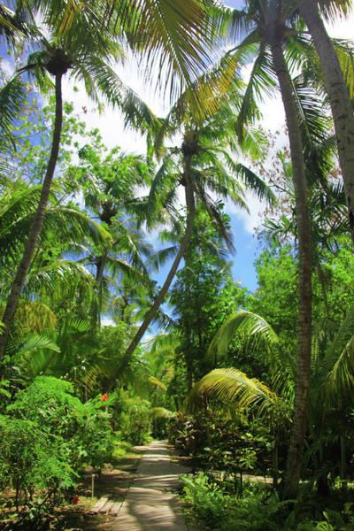 Vertical Garden Photograph - Tropical Garden Path by Elke Selzle