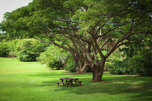 Ornamental Grass Photograph - Tropical Garden With Picnic Benches by Yinyang