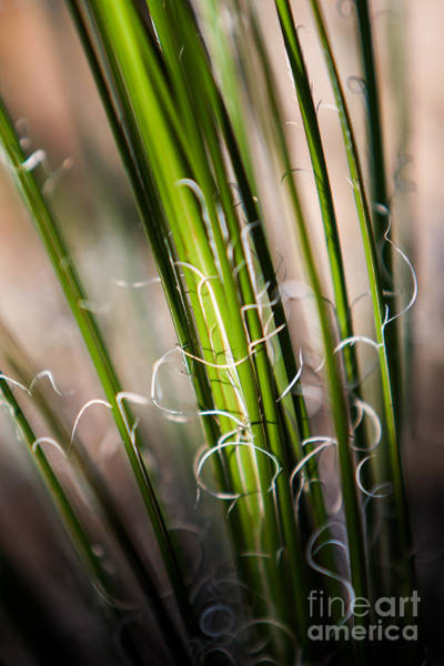 Photograph - Tropical Grass by John Wadleigh