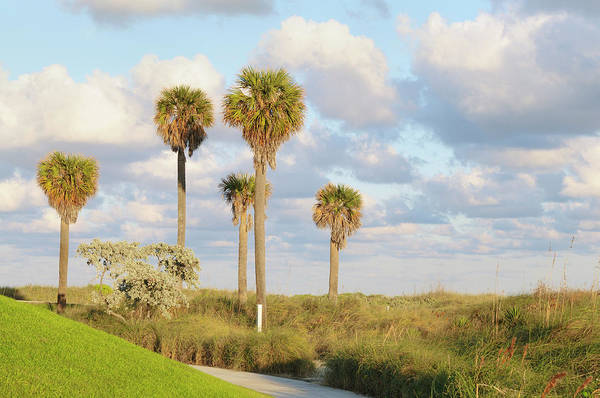 Gulf State Park Photograph - Tropical Landscape by Boogich
