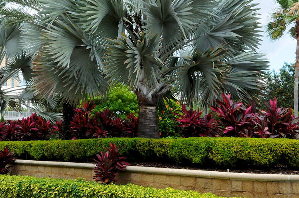 Photograph - Tropical Landscape by DLL Production Co