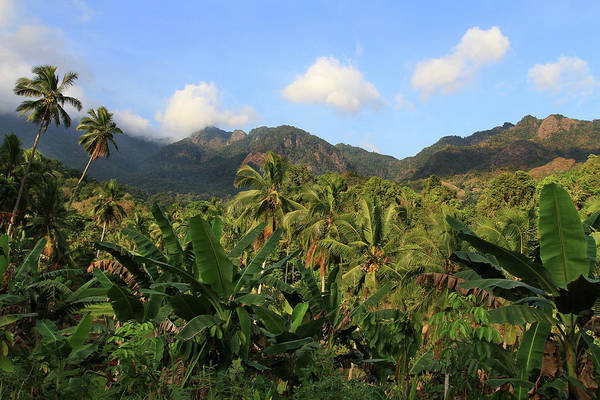 Flores Photograph - Tropical Landscape by Photo By Sayid Budhi