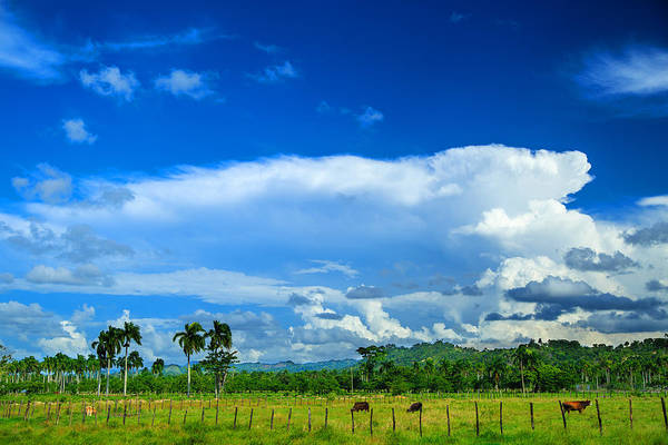 Puerto Plata Photograph - Tropical Landscape With Clouds Palm Trees And Cows by Dmitry Sergeev