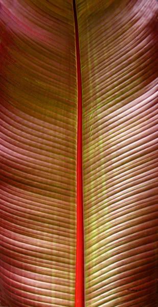 Photograph - Tropical Leaf 2 by Duane McCullough