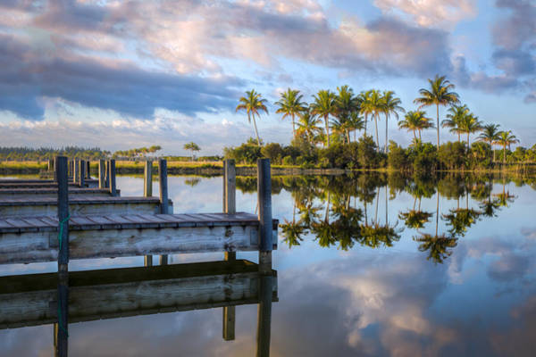 Photograph - Tropical Morning by Debra and Dave Vanderlaan