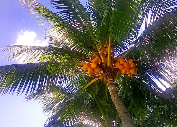 Photograph - Tropical Palm Trees 1 by Duane McCullough