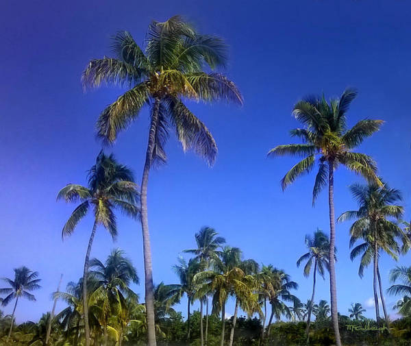 Photograph - Tropical Palm Trees 5 by Duane McCullough