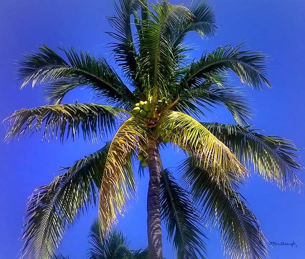 Tropical Palm Trees 8 Art Print