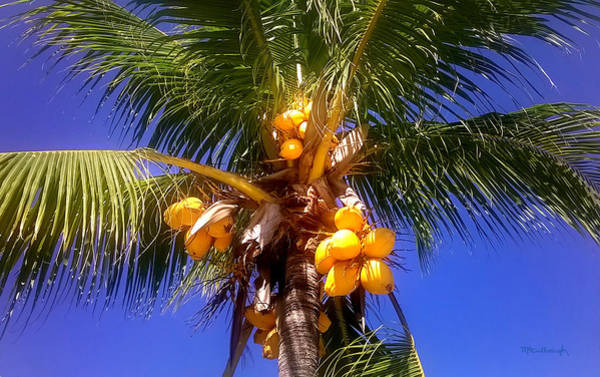 Photograph - Tropical Palm Trees 9 by Duane McCullough