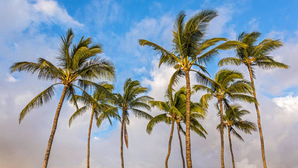 Photograph - Tropical Palm Trees by Pierre Leclerc Photography