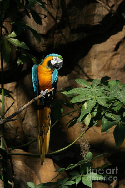 Wall Art - Photograph - Tropical Parrot by Judy Whitton