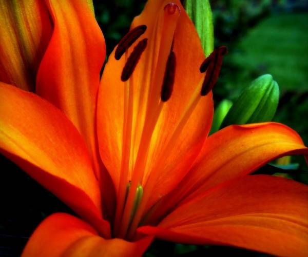 Photograph - Tropical Passion by Karen Wiles