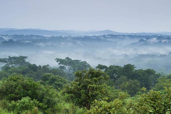 Equatorial Africa Wall Art - Photograph - Tropical Rainforest Kibale Np Western by Sebastian Kennerknecht
