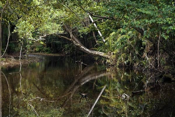 Aquatic Plants Photograph - Tropical Rainforest by Martin Rietze