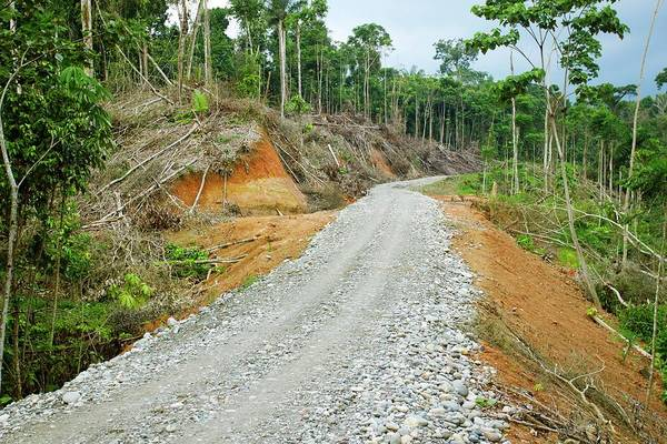 Gravel Road Photograph - Tropical Rainforest Road Construction by Dr Morley Read/science Photo Library
