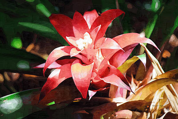Photograph - Tropical Red by Deborah Hughes